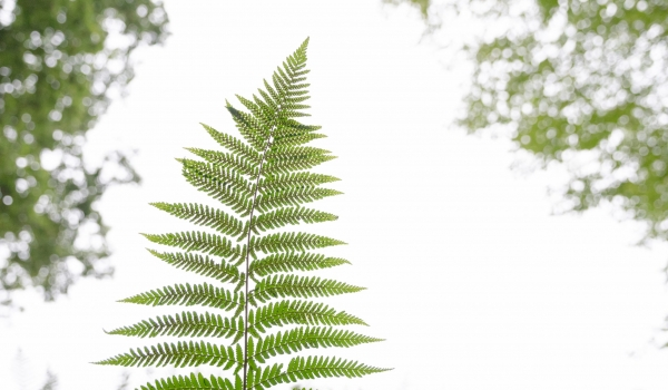 2009-botanische-tuin-46